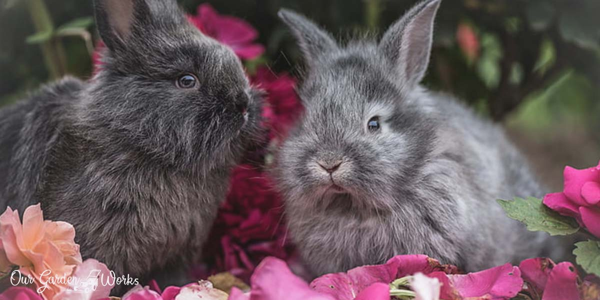 A Guide To Keep Rabbits From Eating Flowers