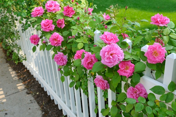 Fence-Off-Your-Rose-Garden