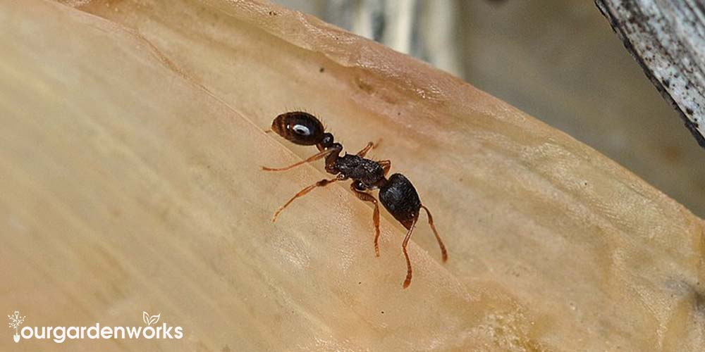 How to Get Rid of Pavement Ants Easily and Effectively