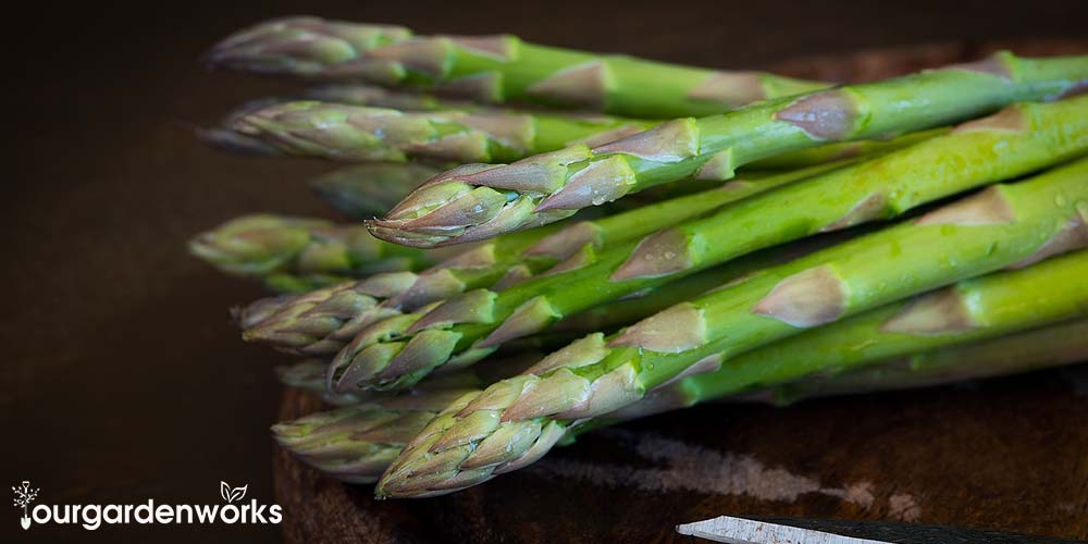How to Grow Asparagus in a Container