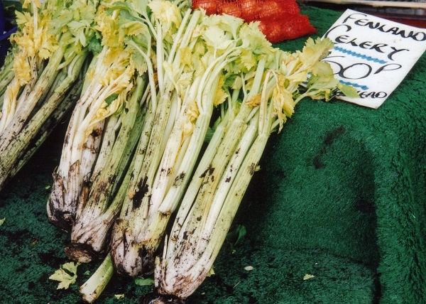 Mounding-blanched celery for sale
