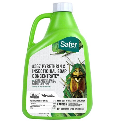 Safer-Brand-Insecticidal-Soap-Pyrethrin-Concentrate