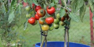 the 18 best insecticides for tomatoes - the ultimate guide