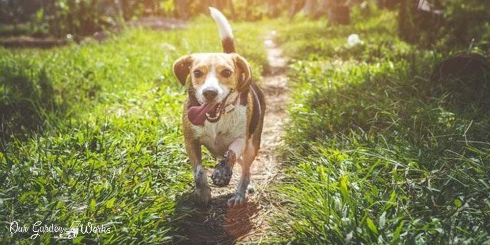how to fix a muddy backyard dog trail