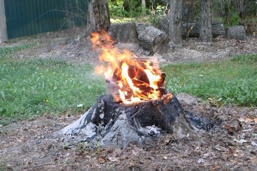 Burning palm tree stumps