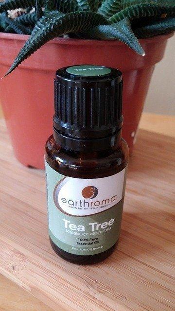 Tomato blight recipe: Tea Tree Oil