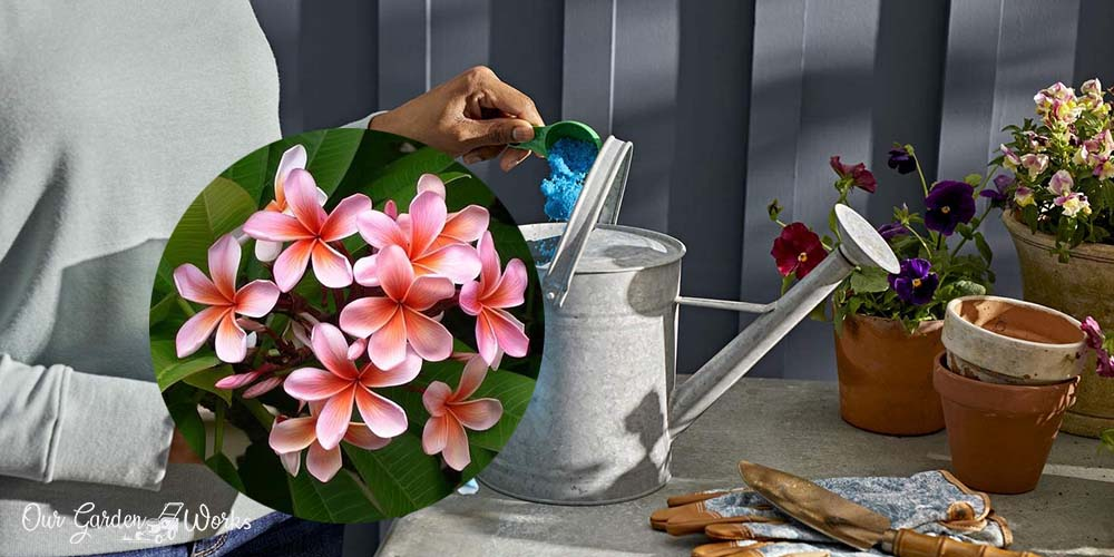 10 Best Plumeria Fertilizer in 2021_ Product Reviews