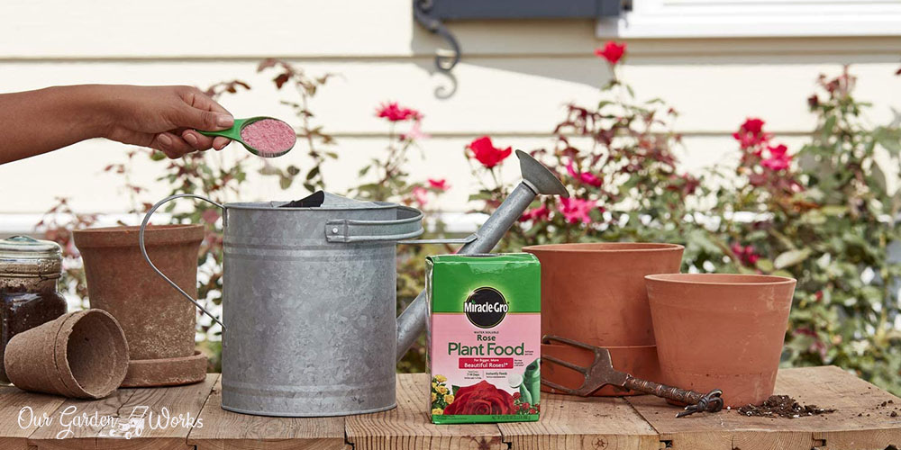 10 Best Rose Fertilizers in 2021