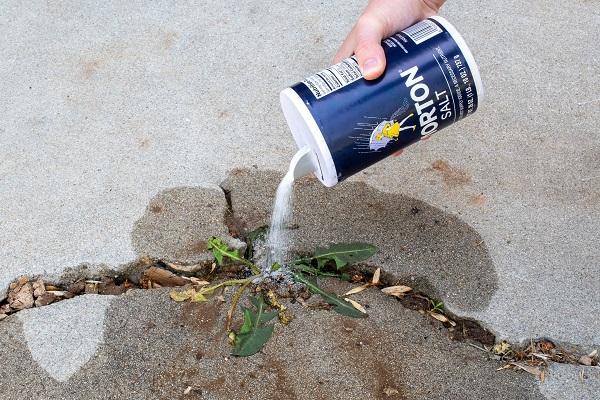 Salt To Kill Dandelions