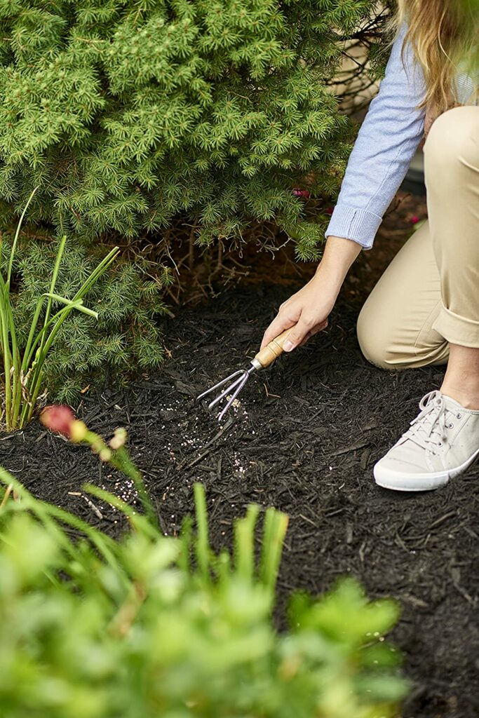 How to apply fertilizer on arborvitaes