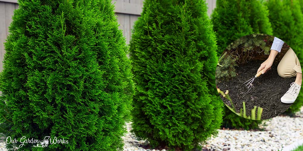 What Are The Best Fertilizers For Arborvitae - Reviews & Tips