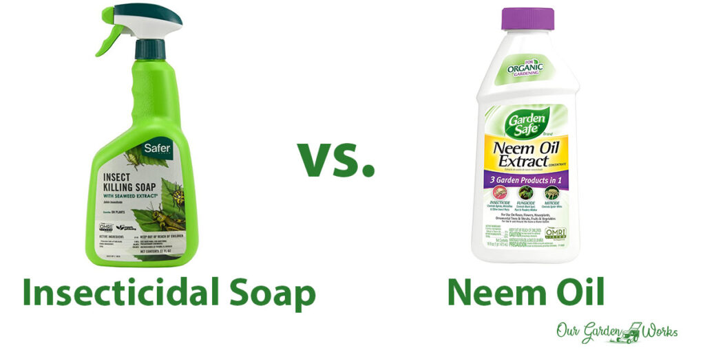 The Differences: Insecticidal soap vs. Neem oil