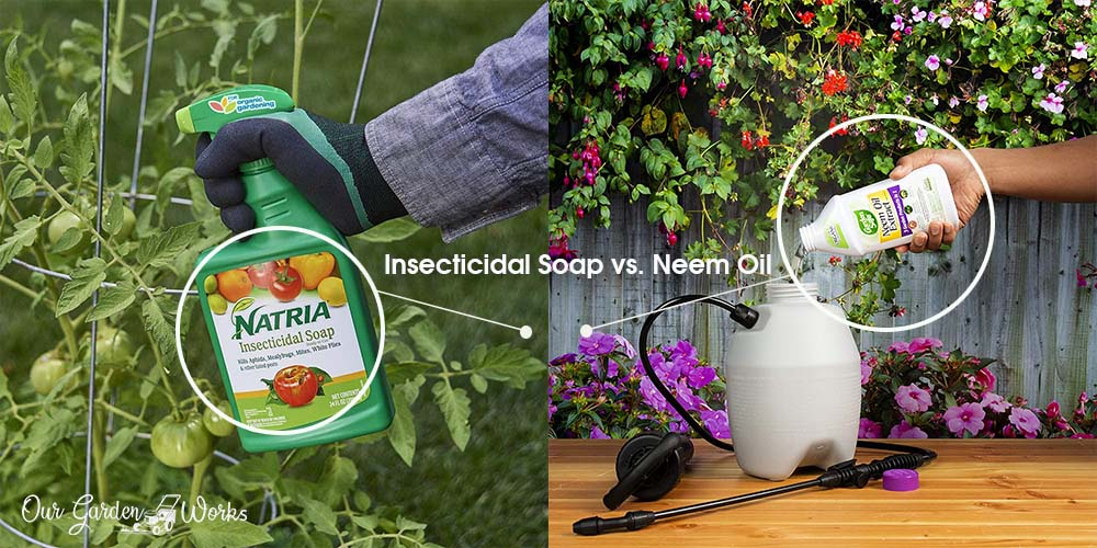Insecticidal Soap vs Neem Oil - Which Is Better