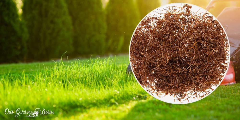The Unpopular Natural Gem - Using Tobacco Dust For Lawn Care