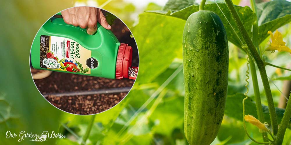 10 Fertilizers For Cucumbers - Reviews and Top Picks