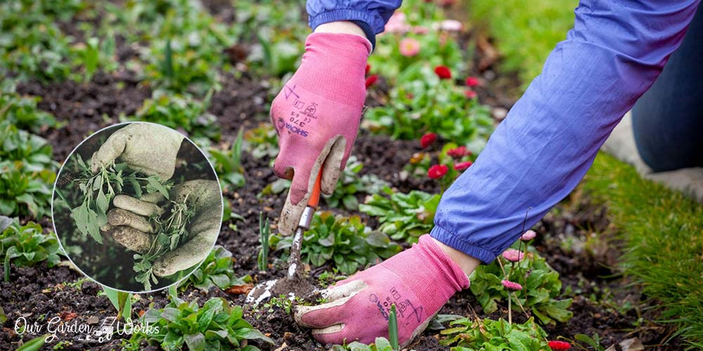 10 effective tips on how to get rid of weeds in your flower bed