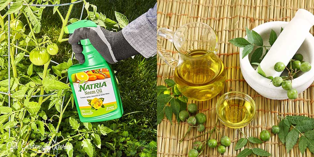 10 Best Neem Oil For Your Plants in 2021