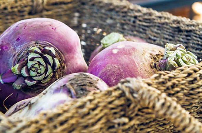 Freshly Harvested Rutabagas