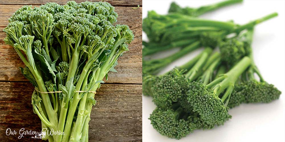 How To Grow Broccolini And Grow Your Own Vegetables At Home