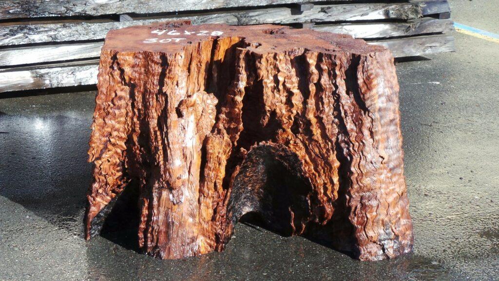 Preserved redwood stump