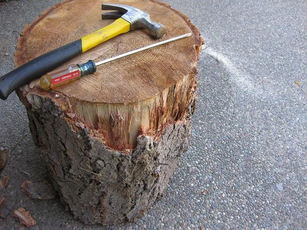 removing its bark