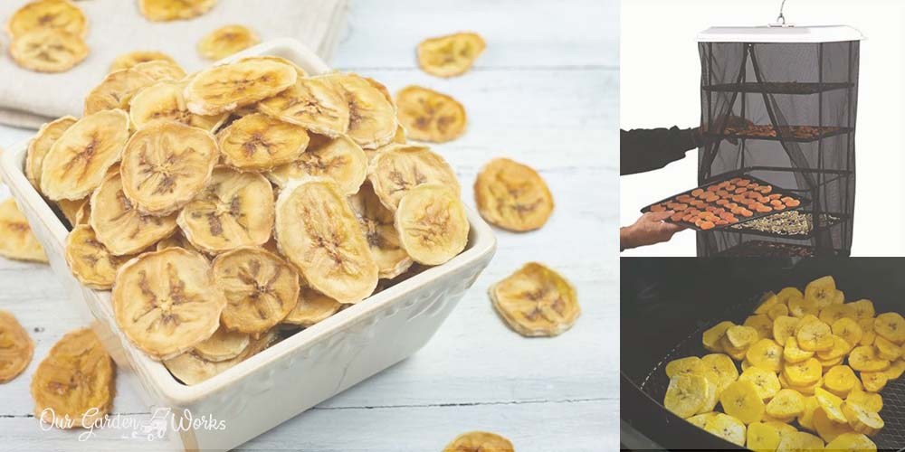 How To Dehydrate Bananas & Make Them Into A Healthy Snack