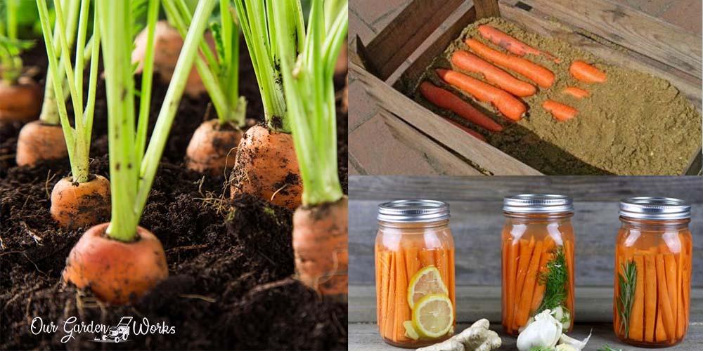How To Preserve Carrots & Extend Their Shelf Life