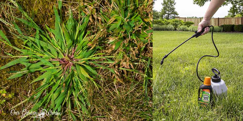 What Is The Best Crabgrass Killer For Your Lawn