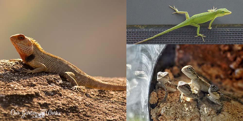 What Do Garden Lizards Eat?: A Guide to Your Reptile Pet In The Garden