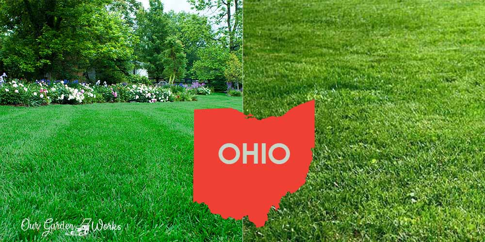 When To Plant Grass In Ohio - Best Seasons and Seeding Techniques